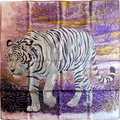 tigre du bengale white purple